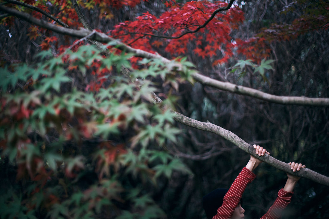 Autumn leaves - photo by Jessica Lindgren Wu