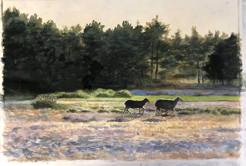 Lars Östling - Lamm i motljus, akvarell