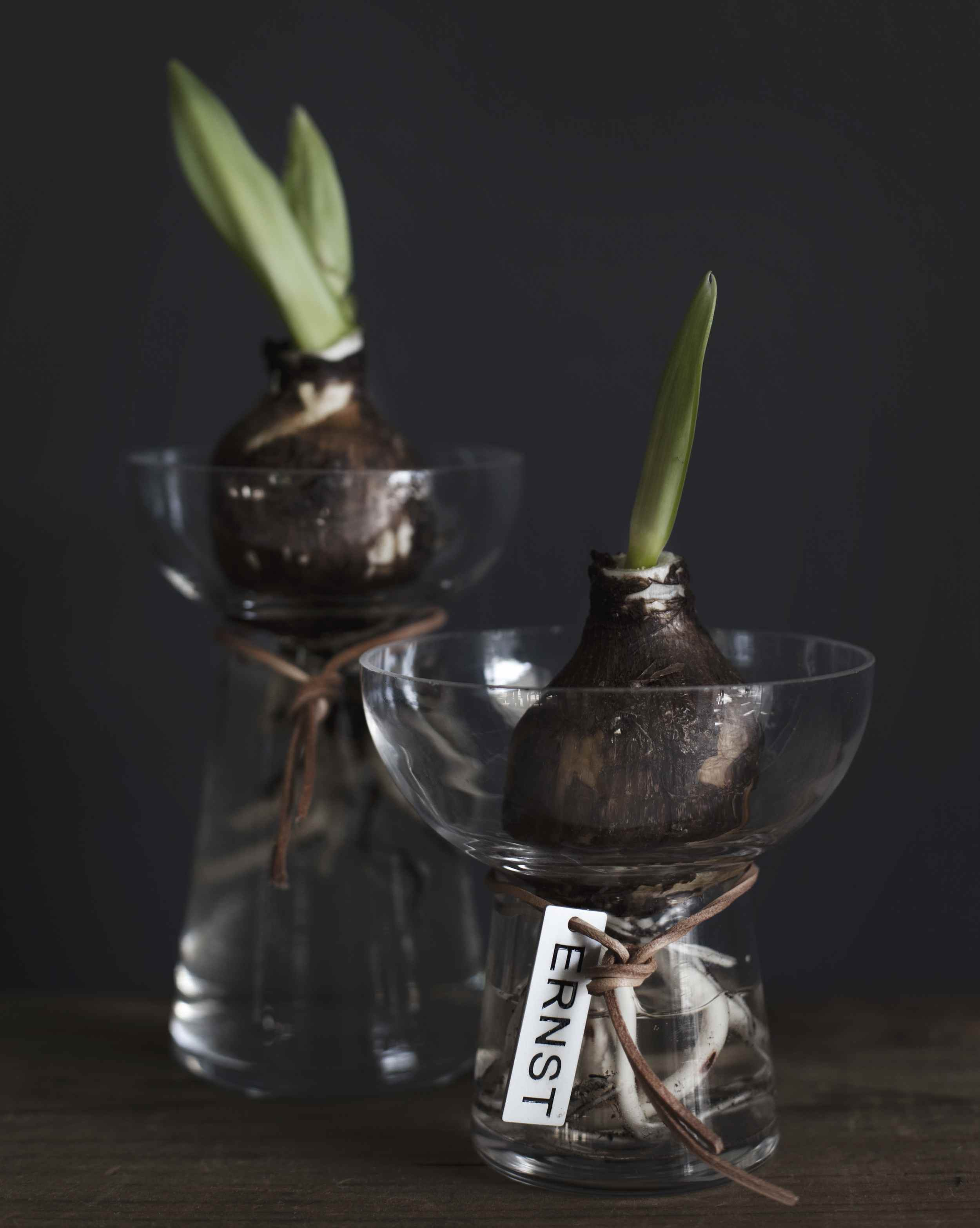 Amaryllis glas klar 18x19cm