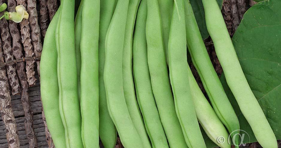 Frö - Böna bryt saxa