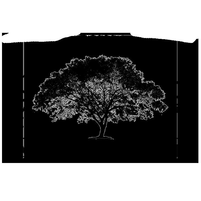 WALNUT TREE DISTILLERY LTD