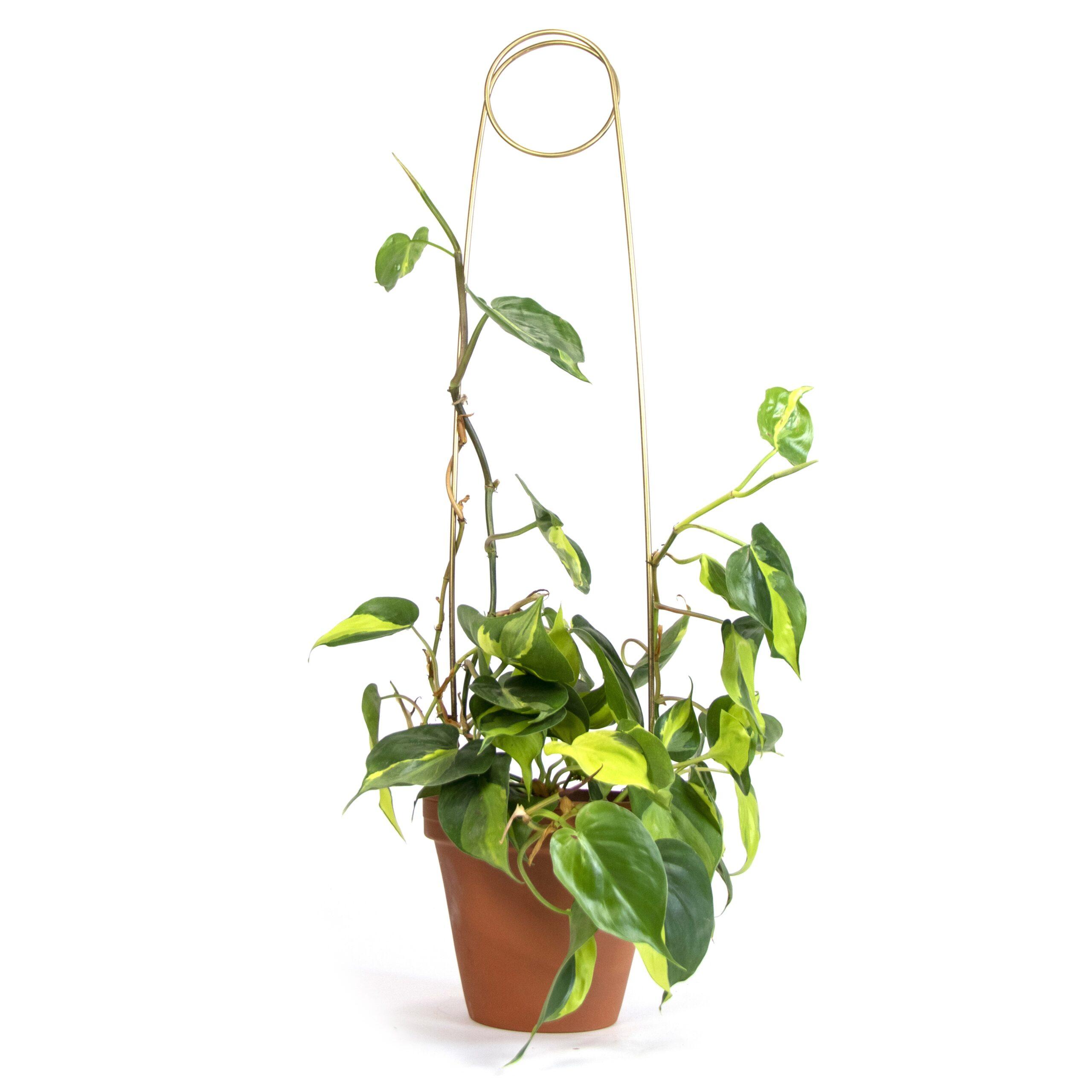 Botanopia Golden Plant Stake