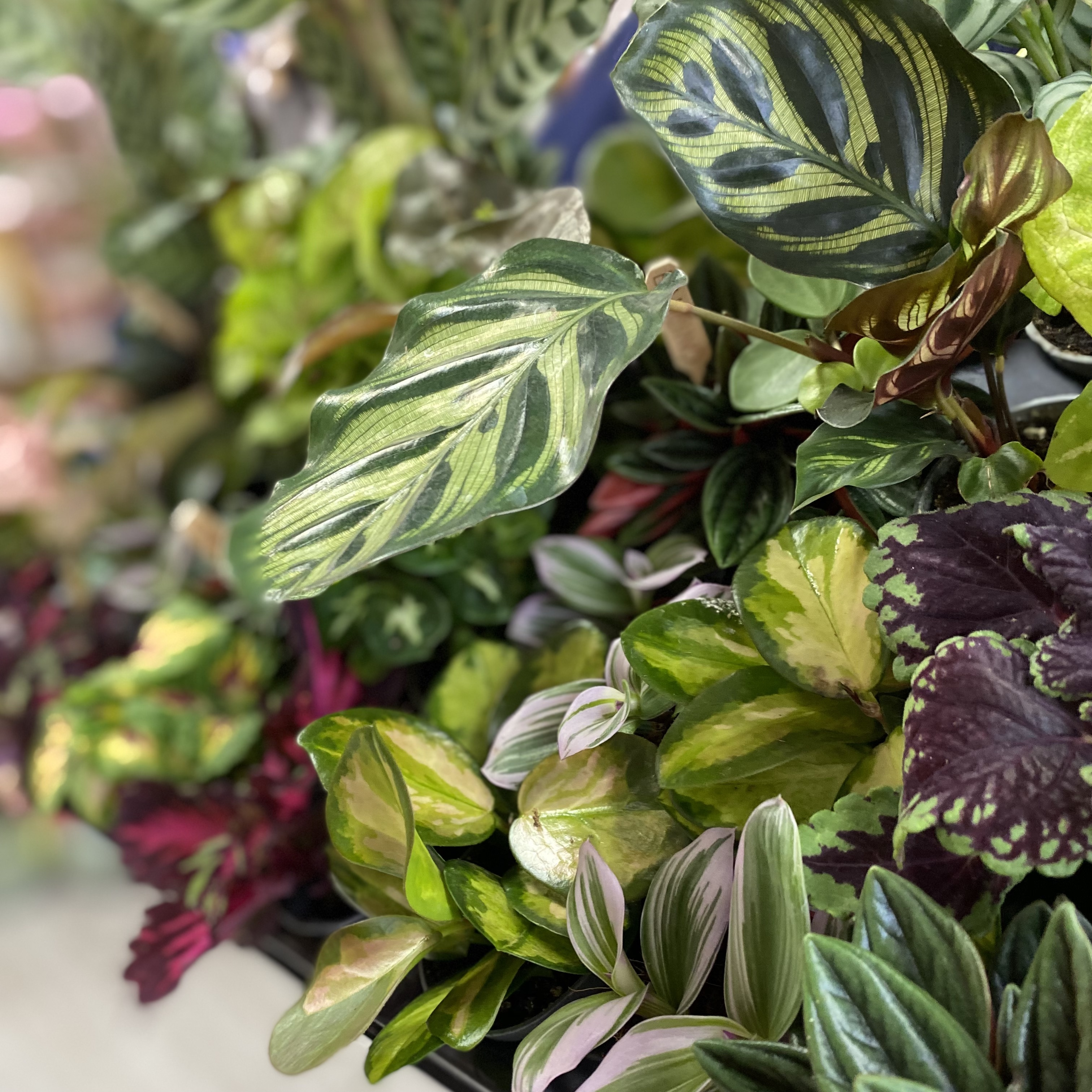 Pick & Mix Miniature Plants in a plastic-free selection box