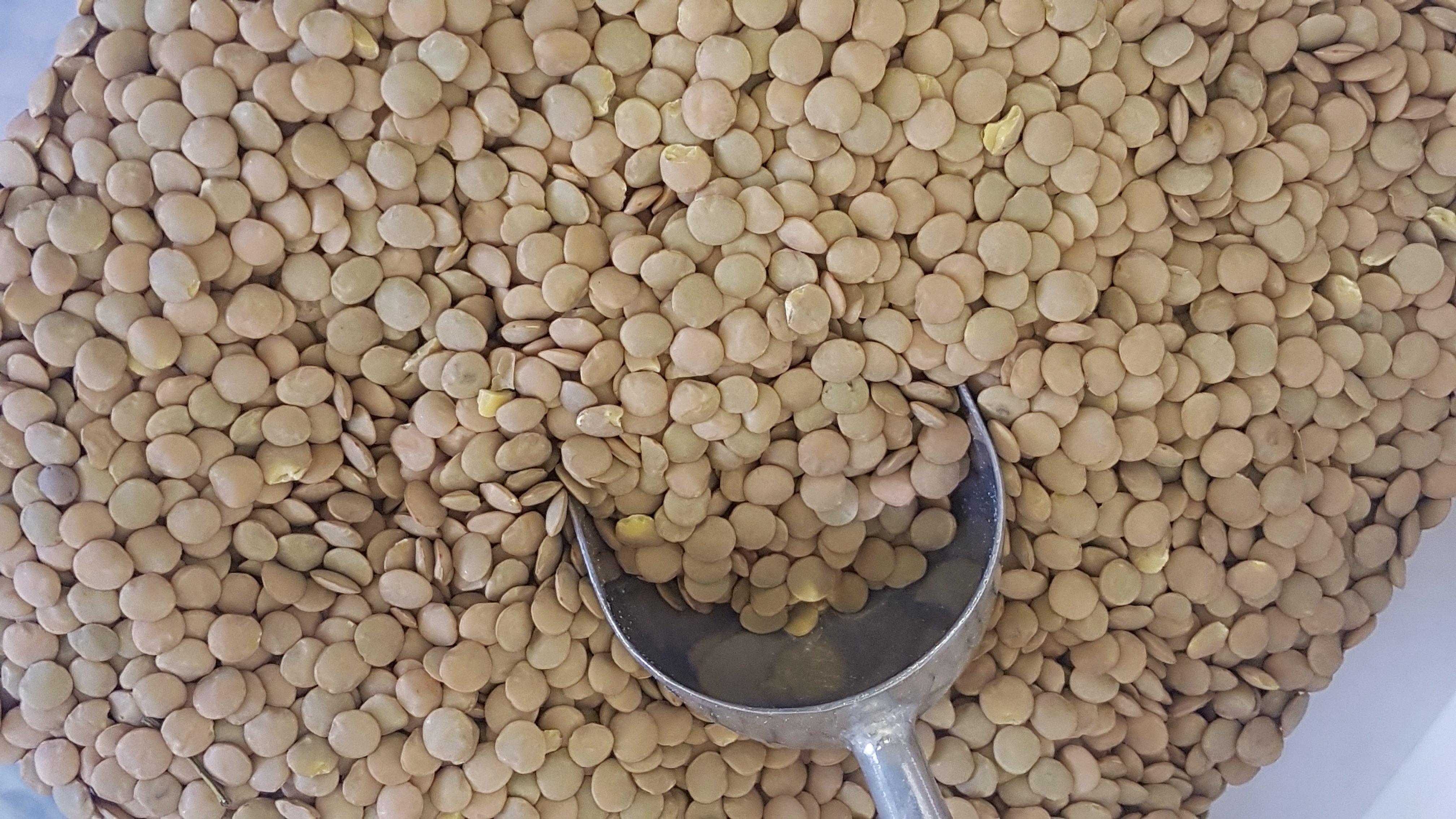 Green Lentils Organic -per 100g