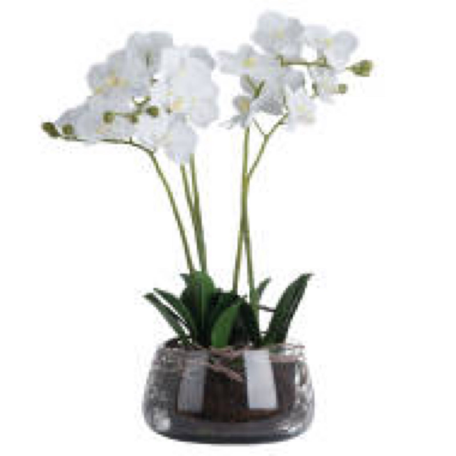 Large white everlasting orchid with glass vase 61 cm