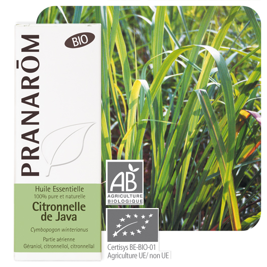 Pranarôm Citronnella Java essential oil (Cymbopogon winterianus) 10 ml 4536