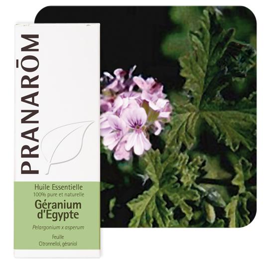 Pranarôm Geranium (egypt) essential oil (Pelargonium x asperum) 10 ml 4536
