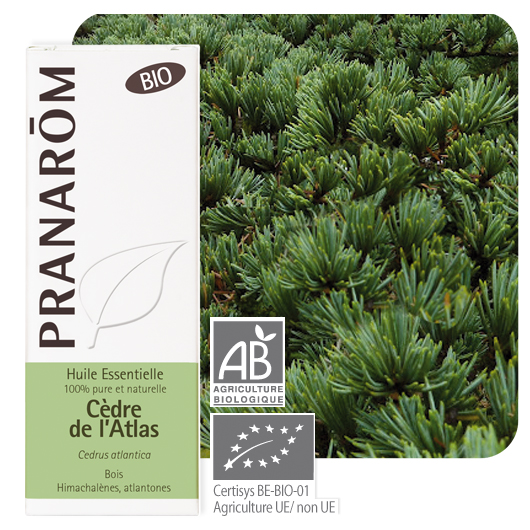 Pranarôm Cedarwood essential oil (Cedrus atlantica) 10 m 4536