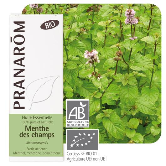Pranarôm Cornmint essential oil (Mentha arvensis) 10 ml 4536