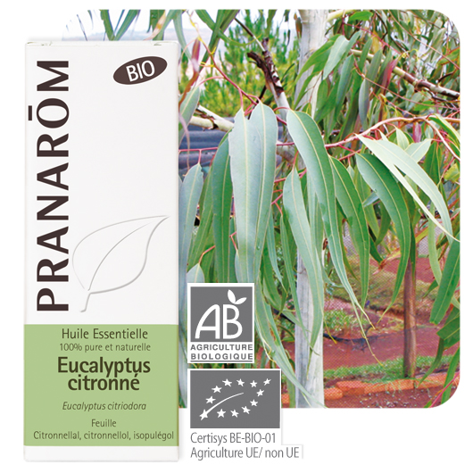 Pranarôm Lemon eucalyptus essential oil (Eucalyptus citriodora) 10 ml 4536