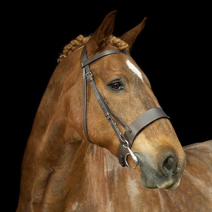 Gallop Hunter Bridle