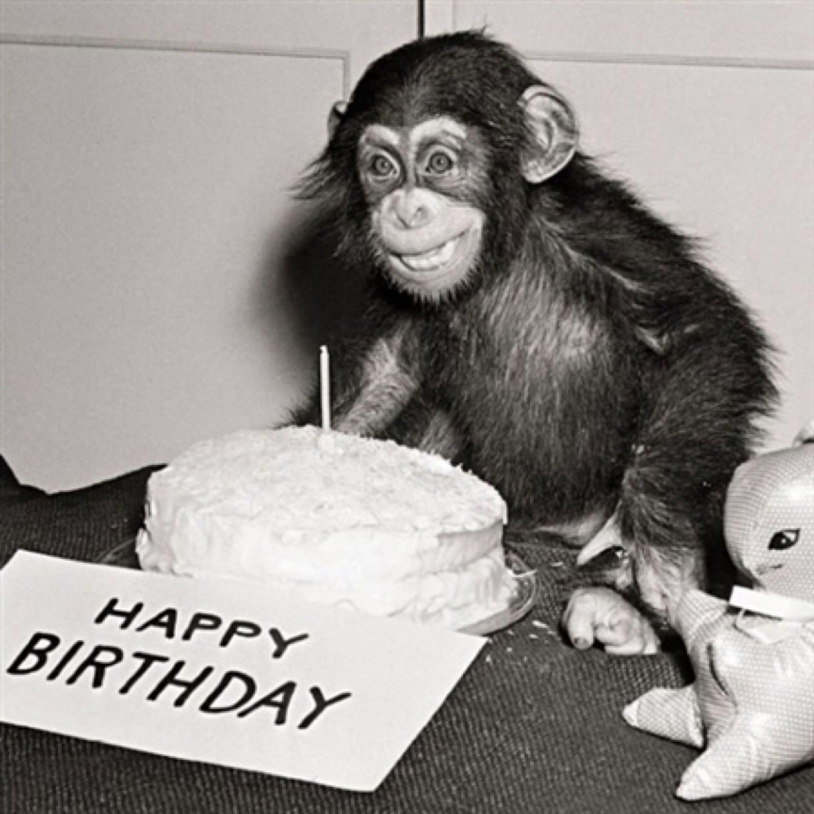 'Birthday Chimp' Exposure Card