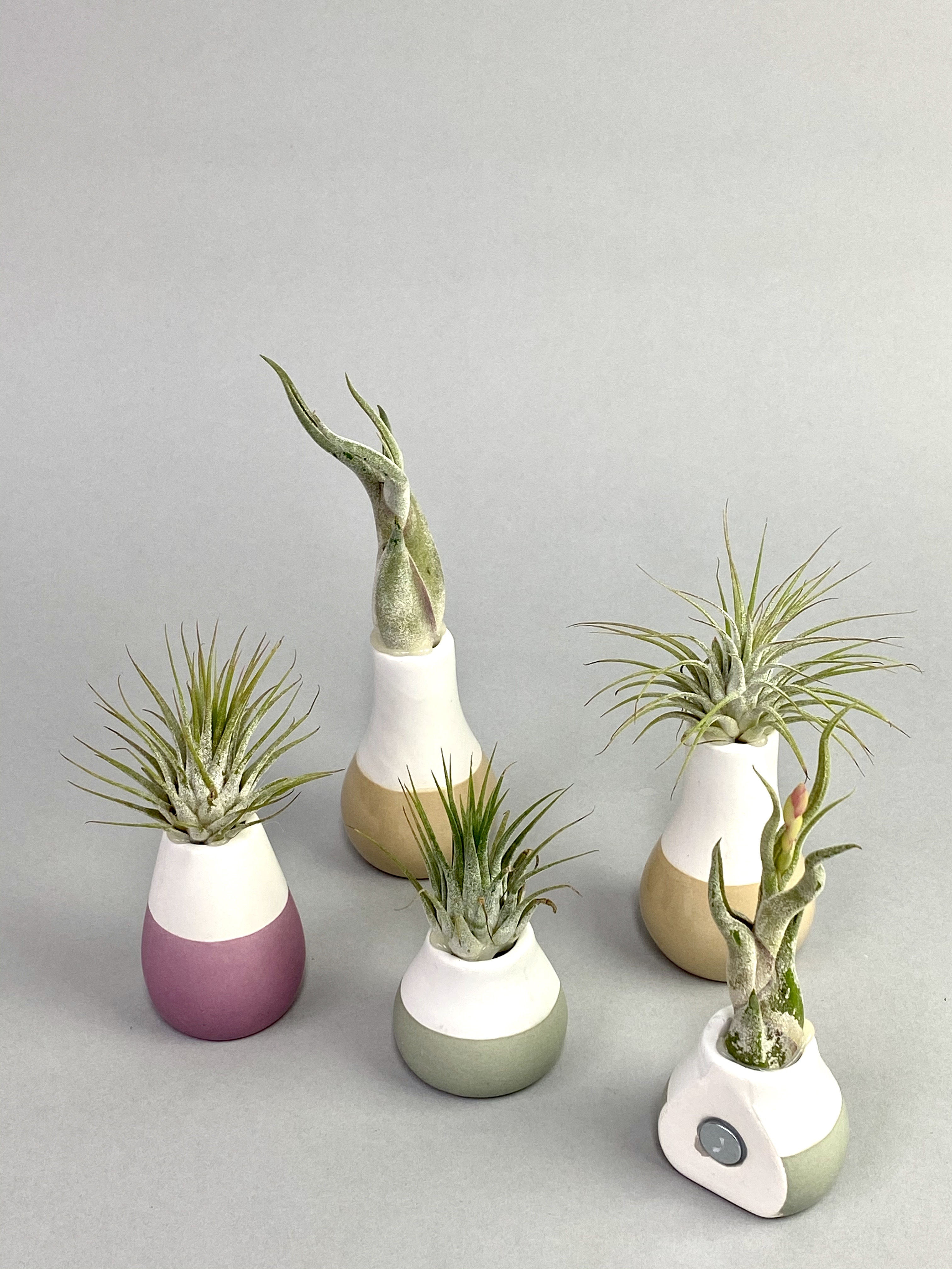 Airplant in Magentic Pot