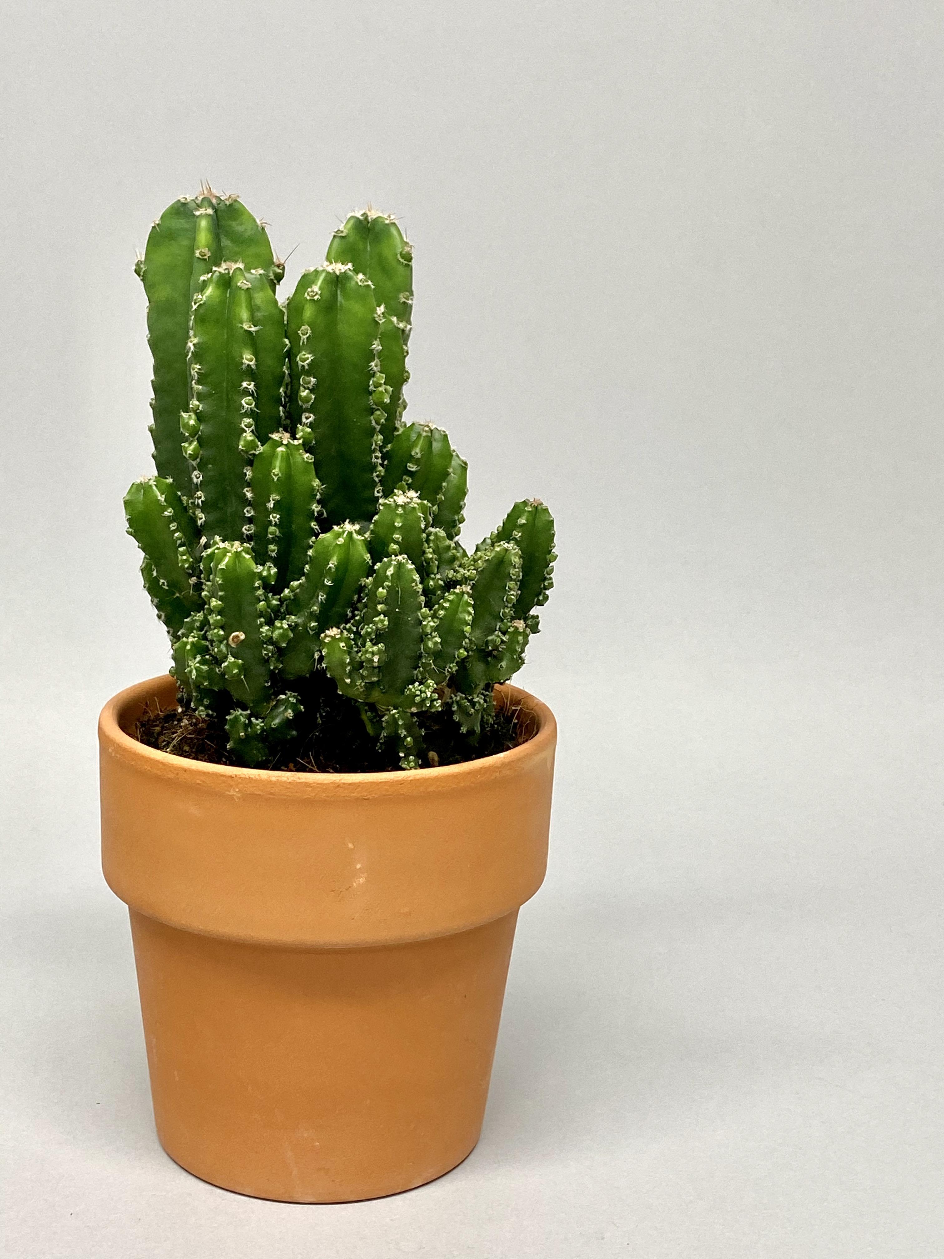 13cm Diameter 'Fairy Castle' Cacti