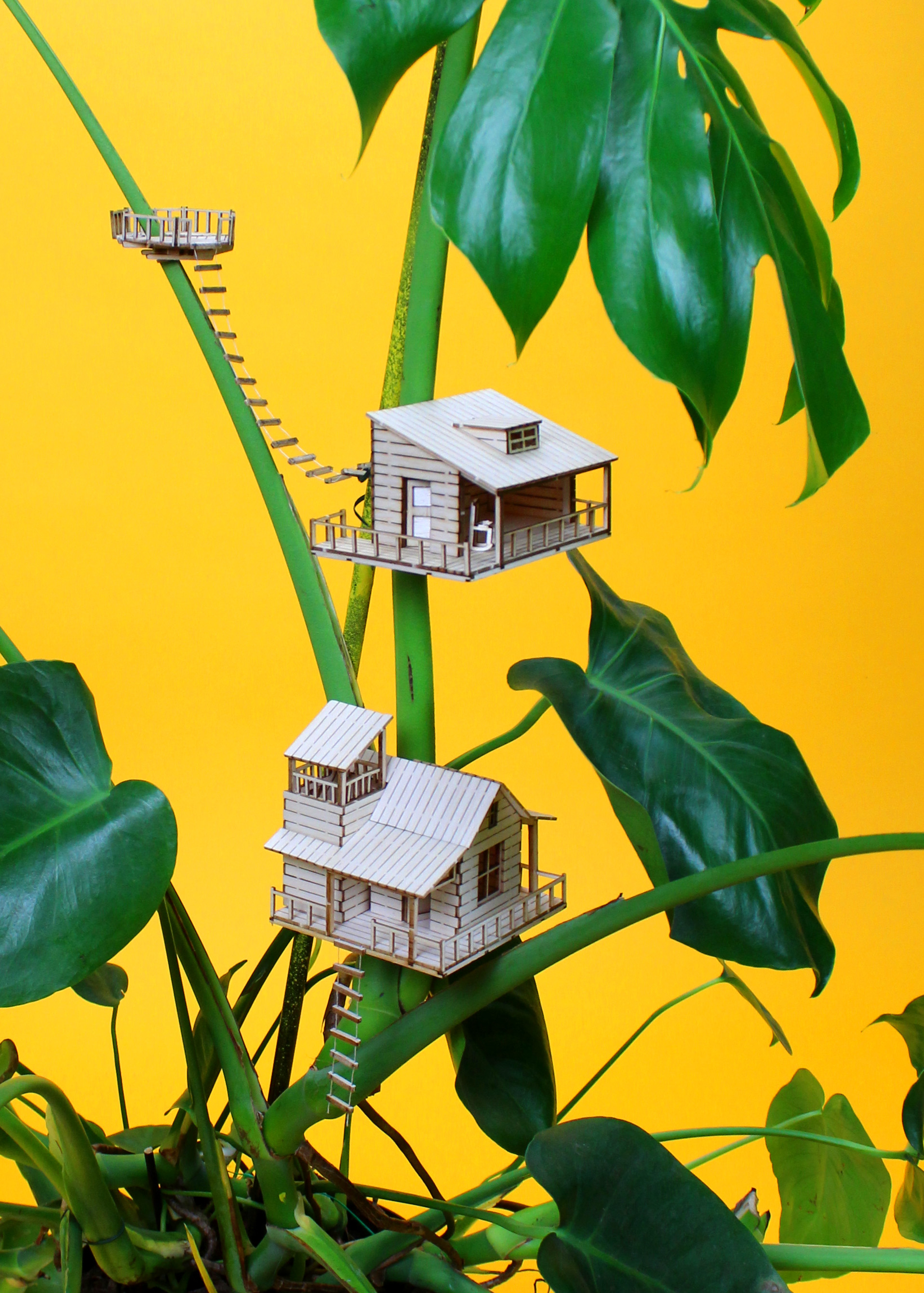 Amazing Plant House Collection
