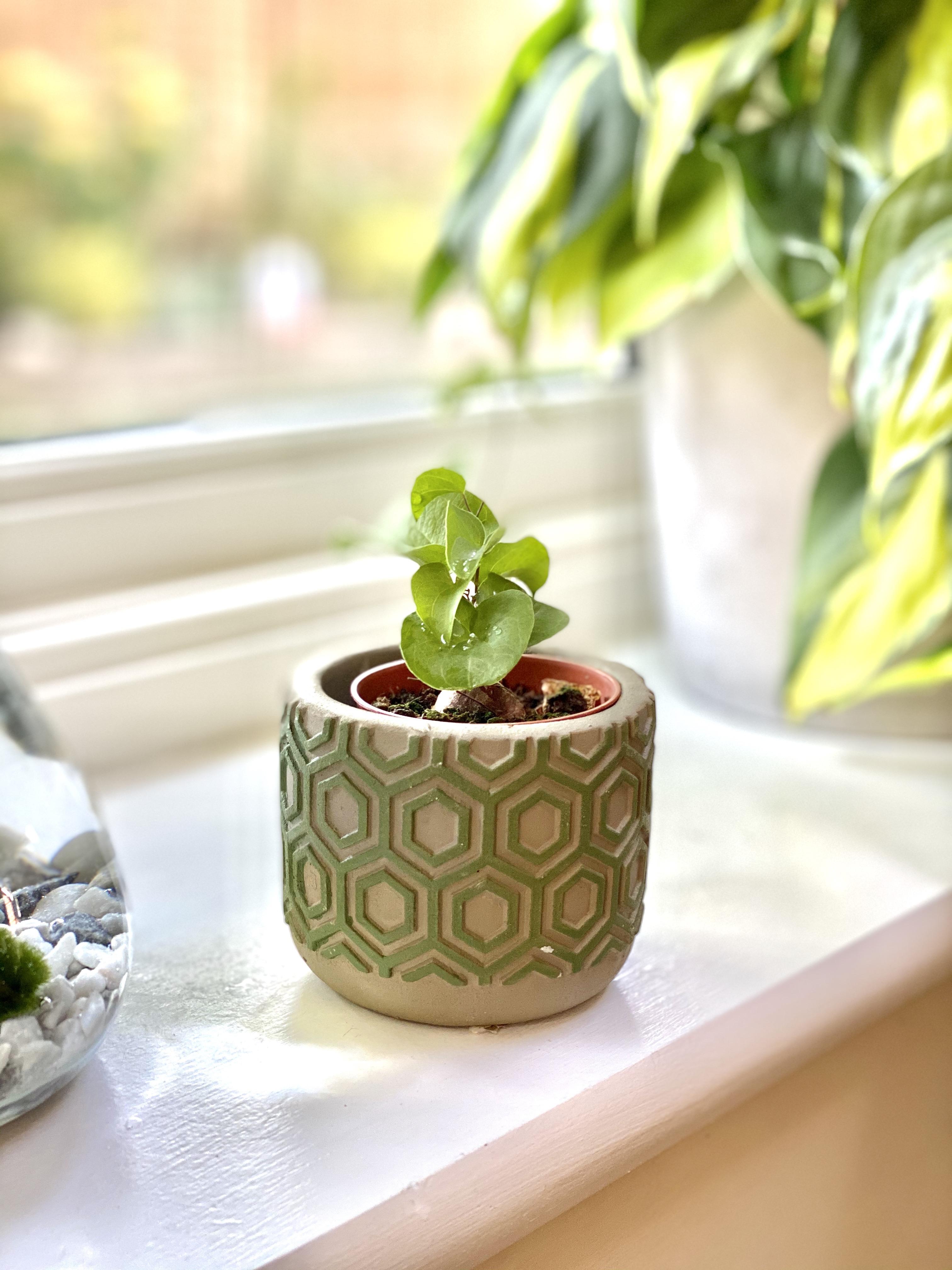 Baby Pot 235