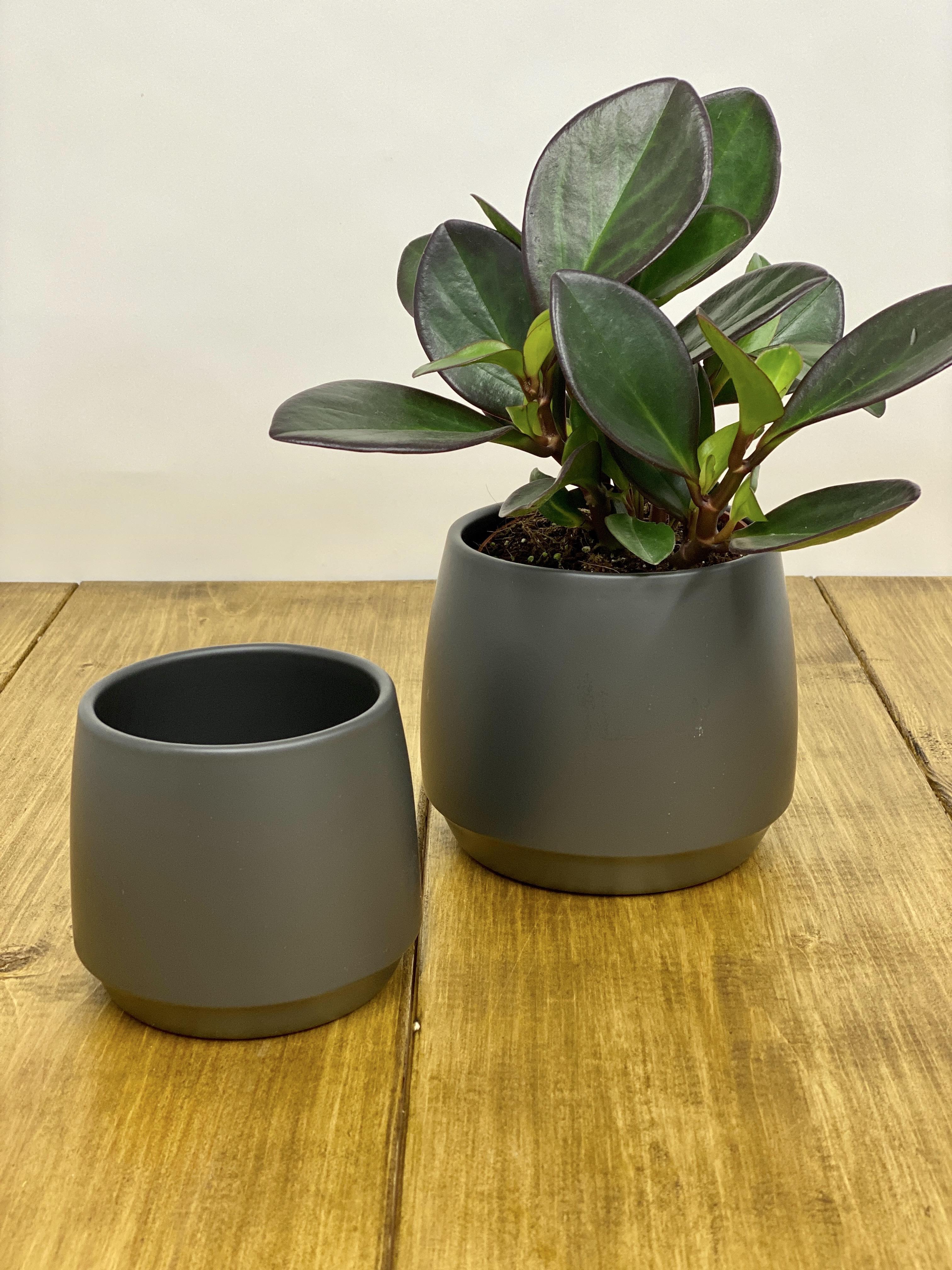 Lucca Black (Size Options 9.5-12cm)