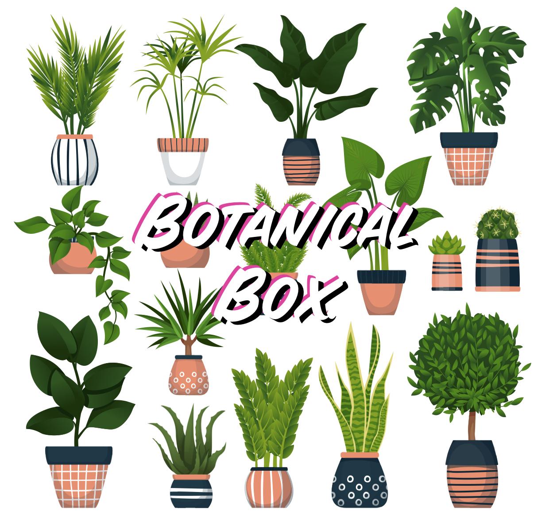 Botanical Mystery Box