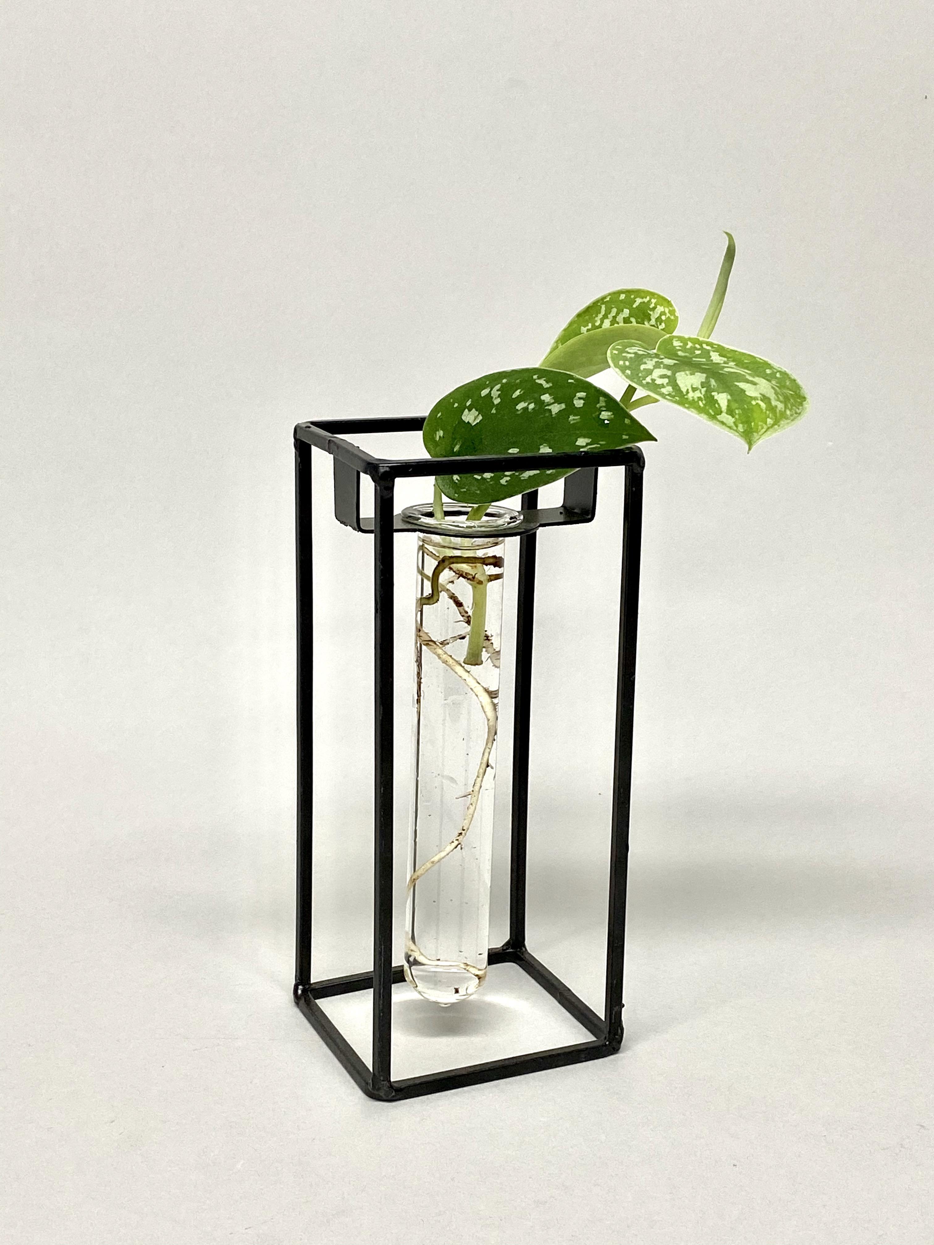 Propagators With Plants