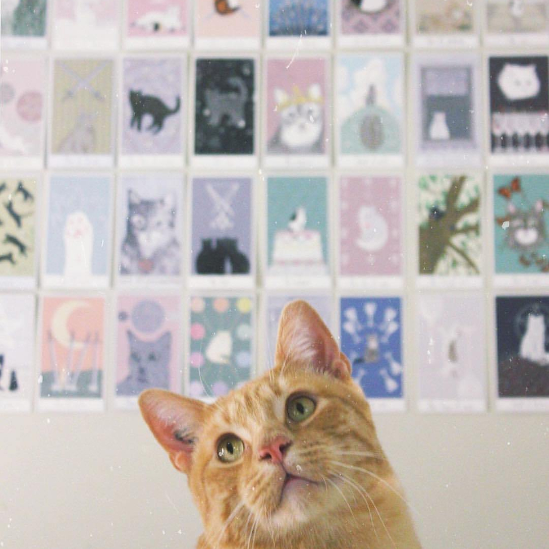 Considerate Cat Tarot Bundle