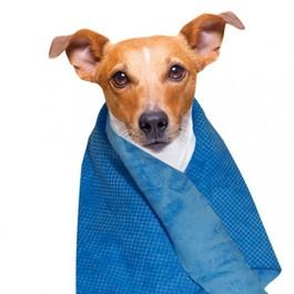Cool towel