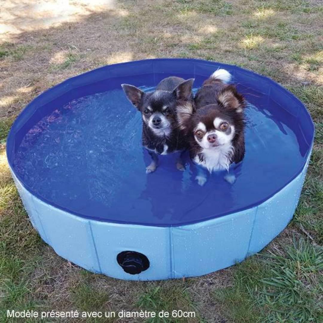 Dog Pool
