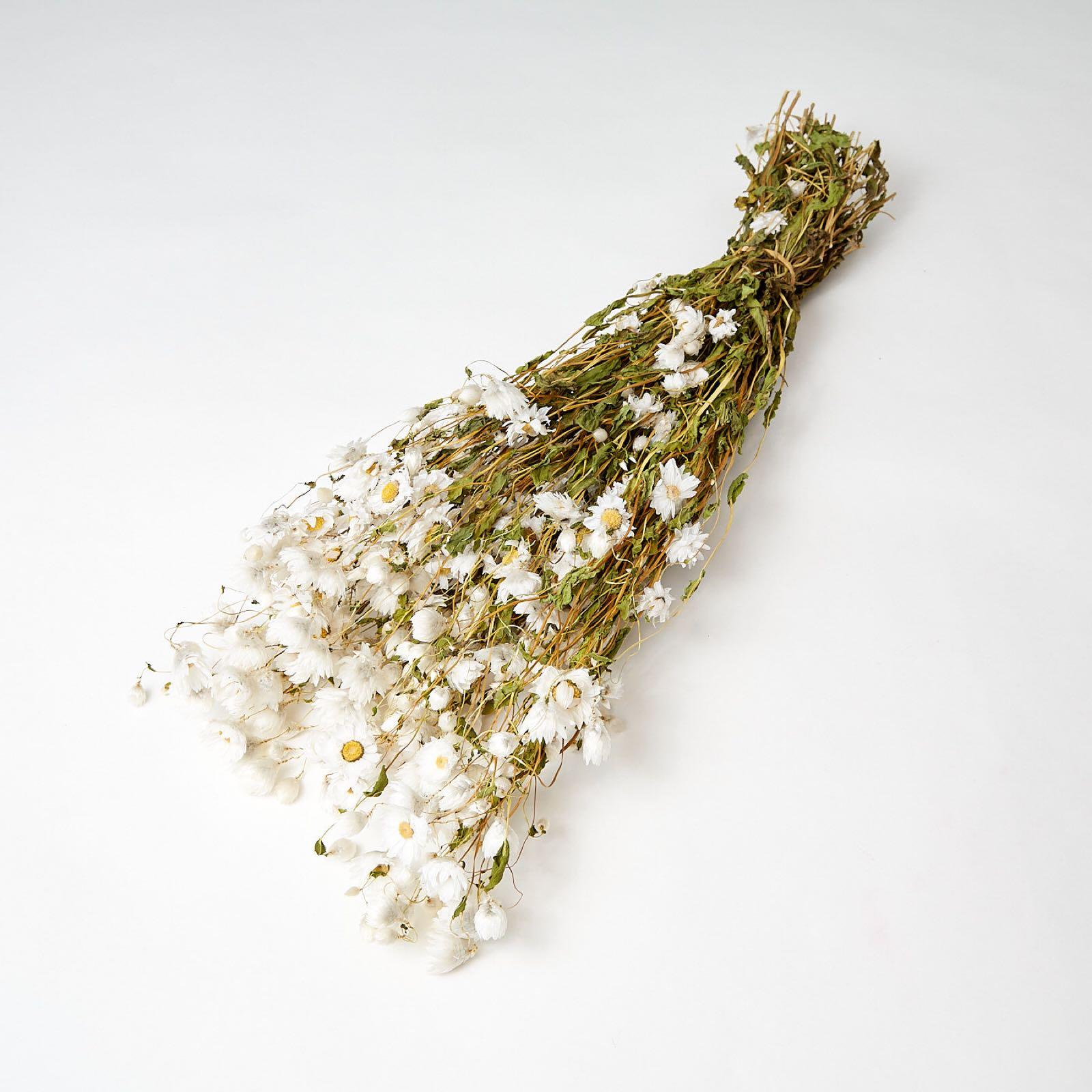 White Rodanthe