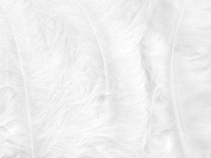 Fjær 15 stk Hvit