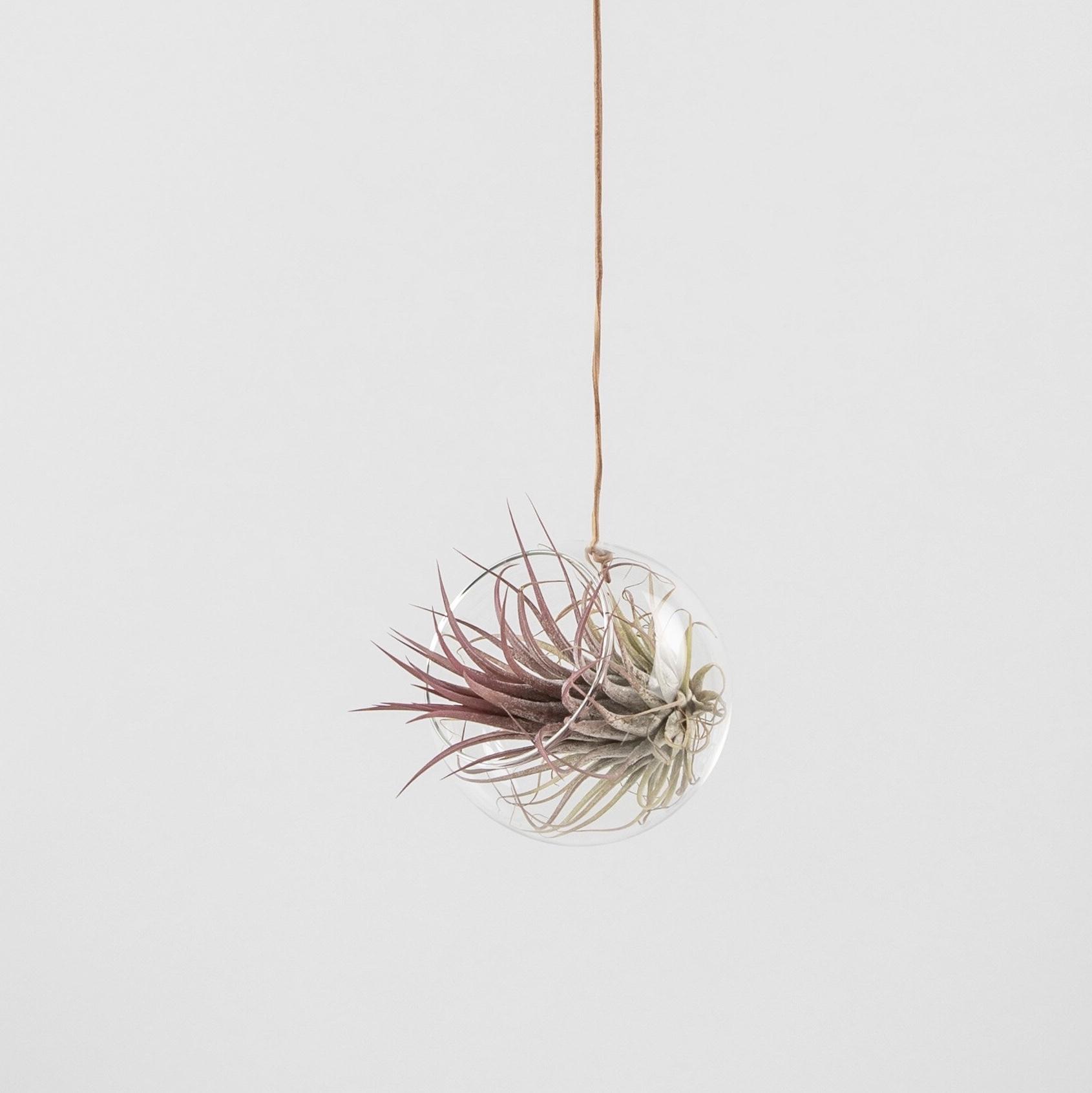 Studio about, Plant bubble, hanging