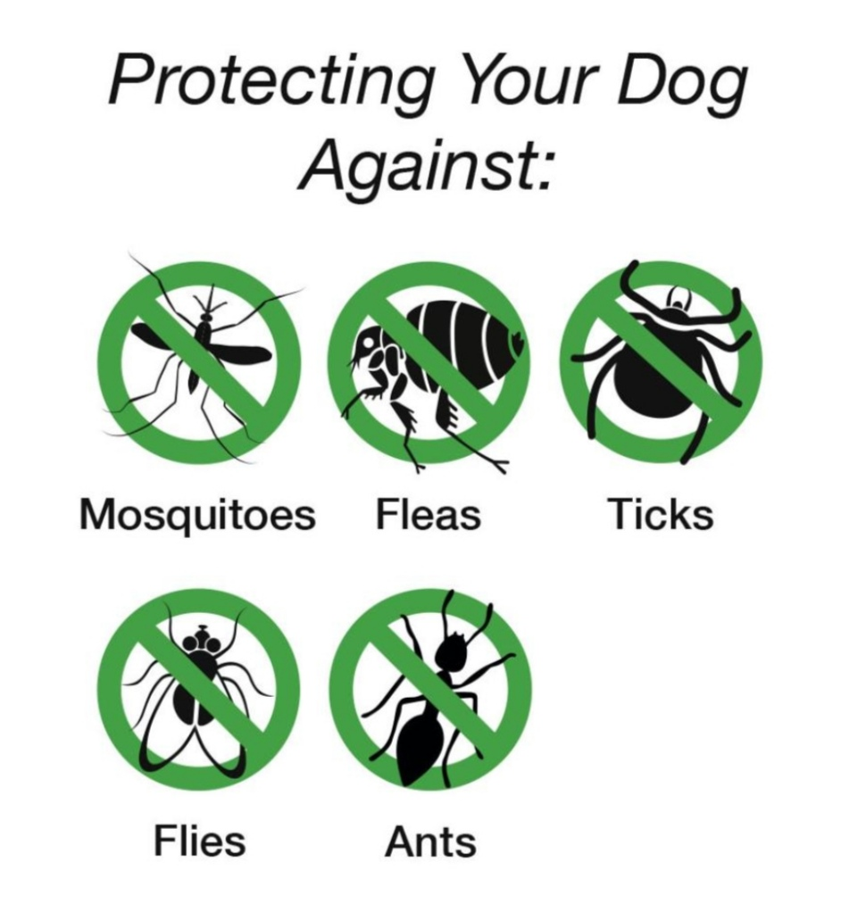 Scruffs Insect Shield Doggy Snood Halstuch
