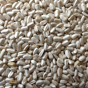 Sunflower Seeds | Organic