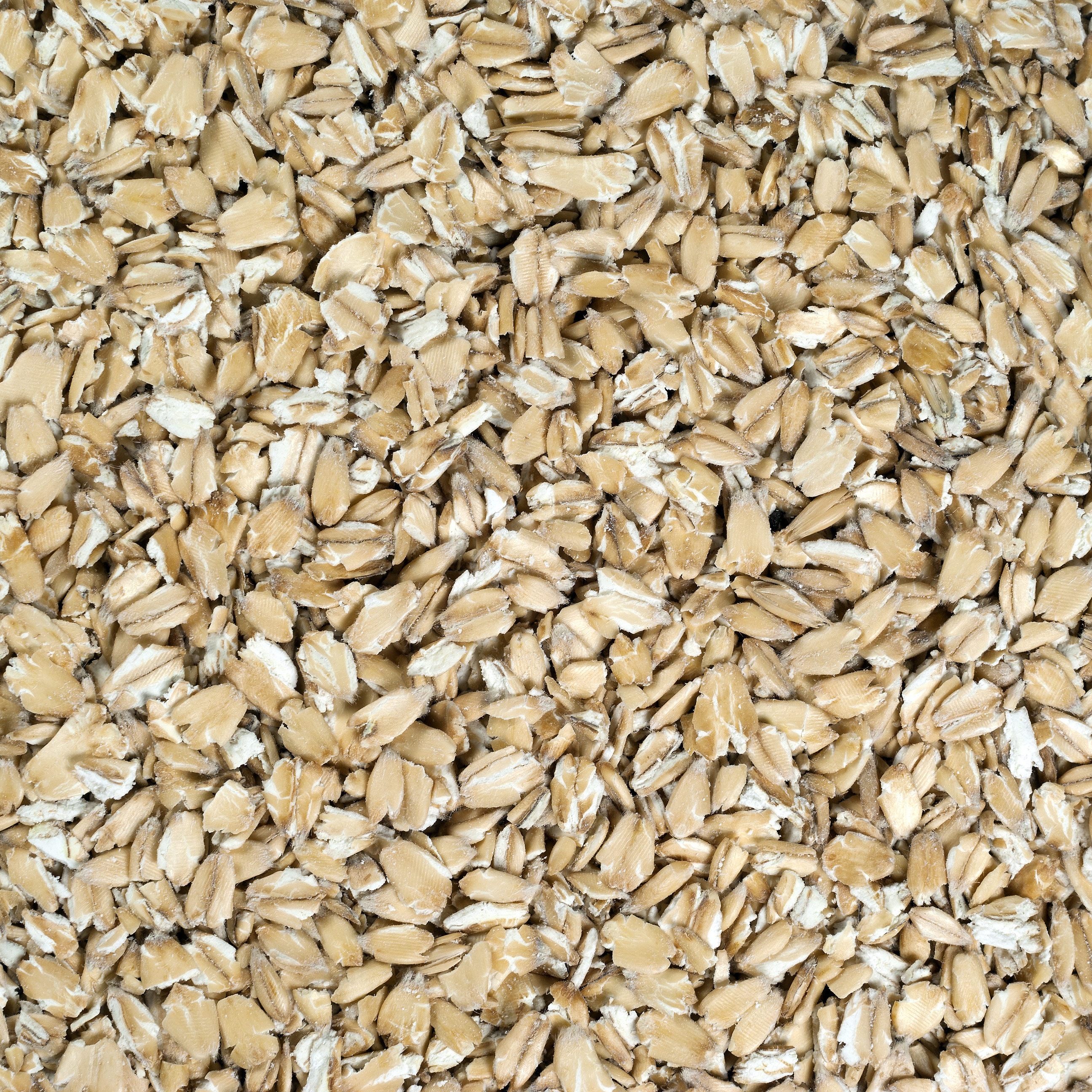 Rolled Oats | Organic