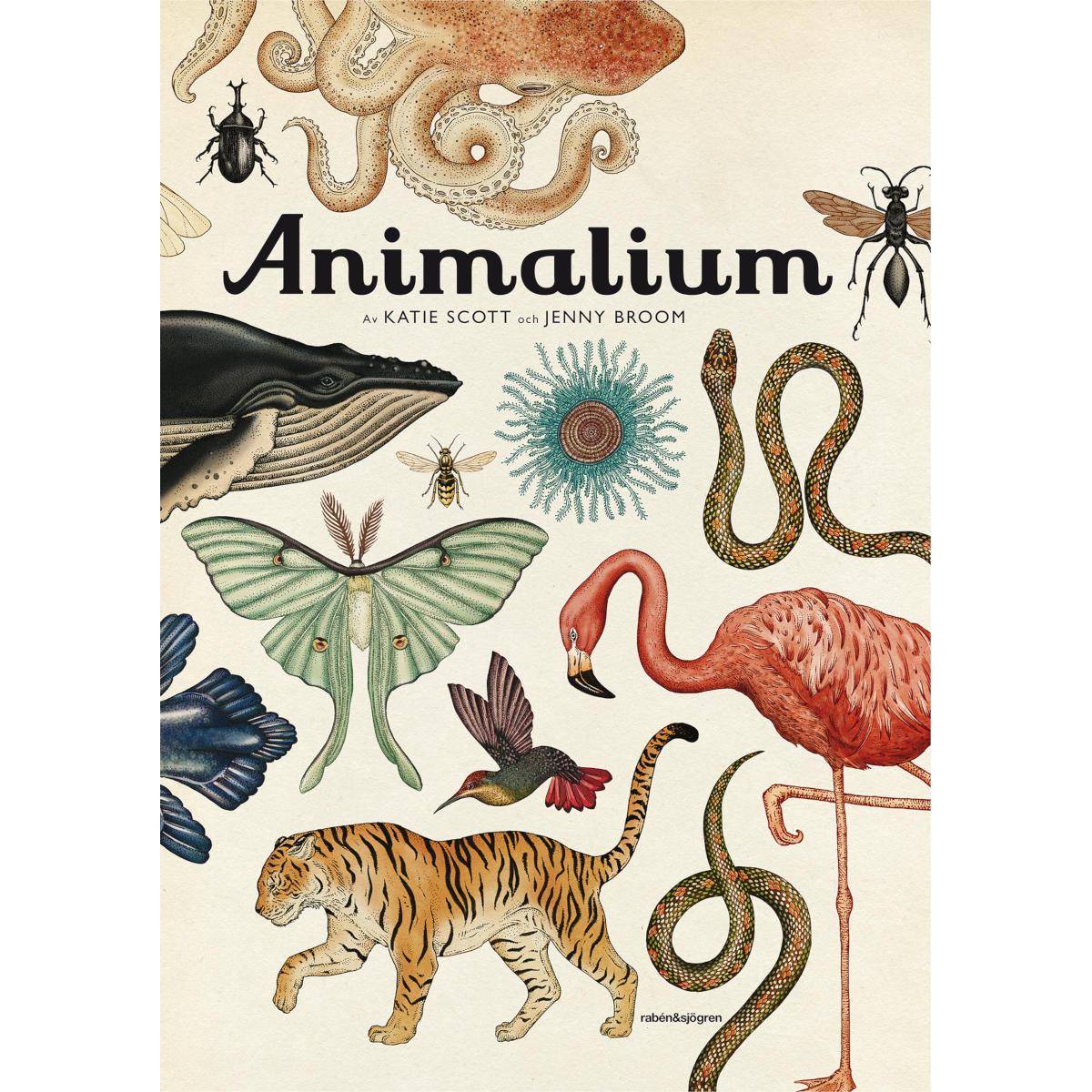 Bok - Animalium