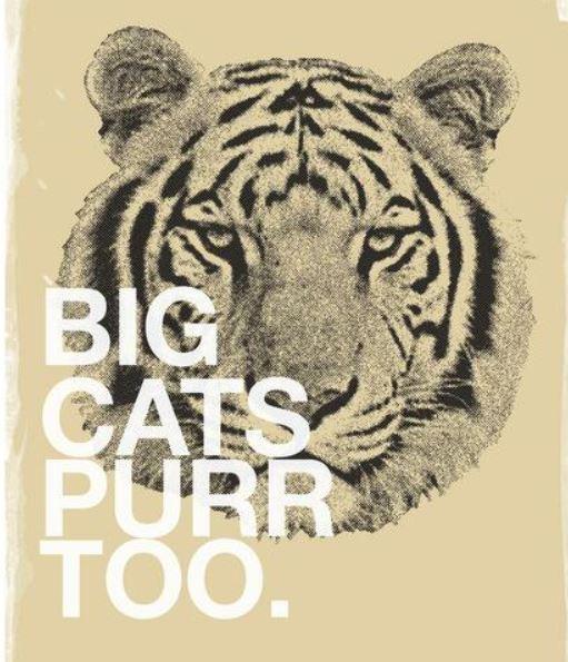 'Big Cats Purr Too'  (A3) Art print
