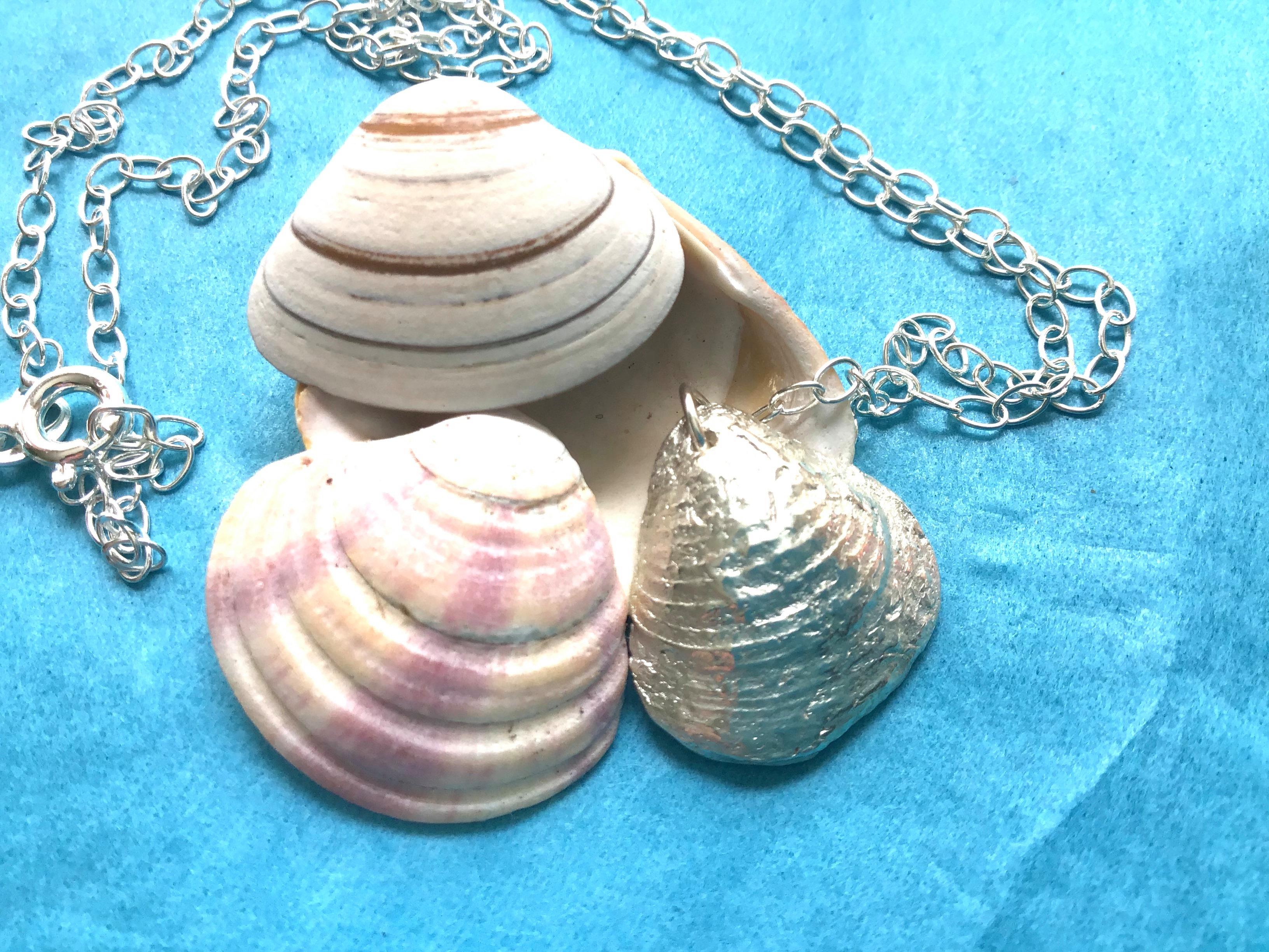 Silver Striped Venus Shell
