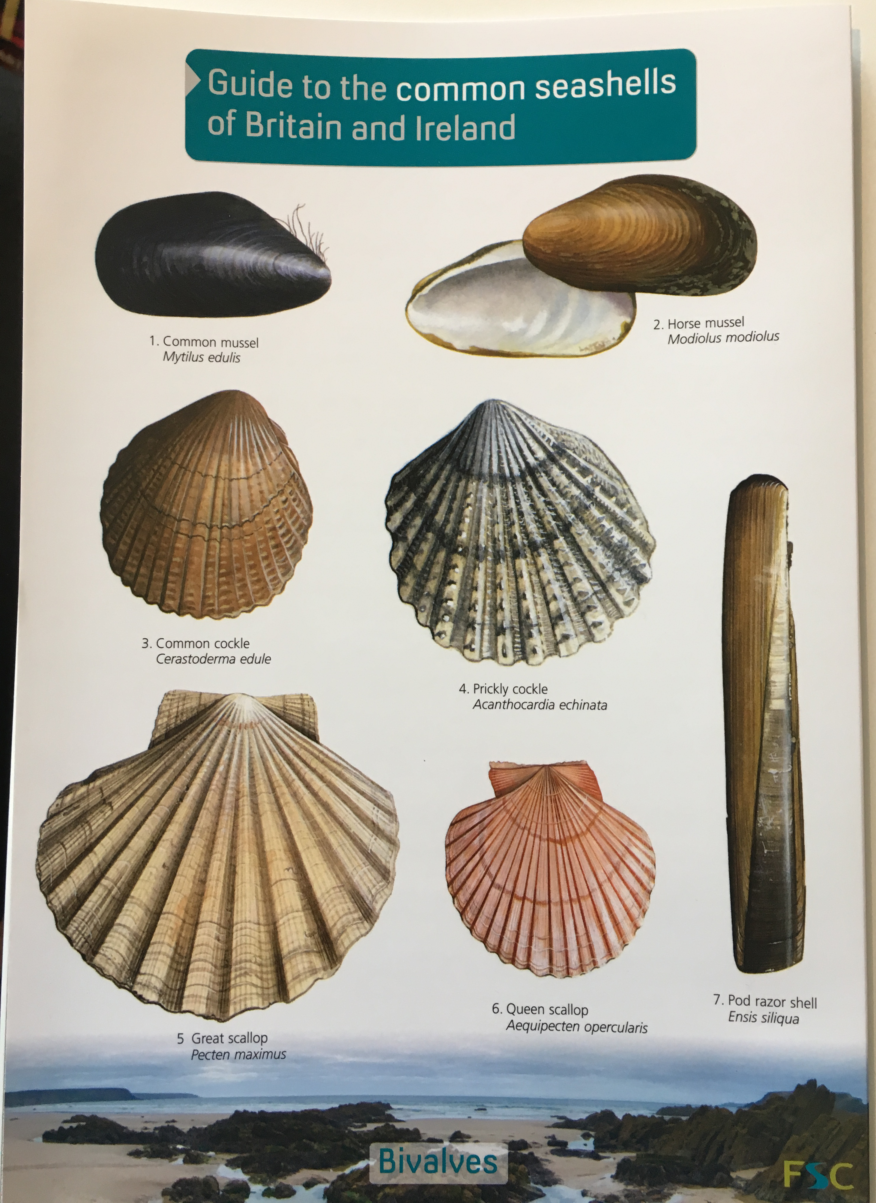ID Guide - Seashells