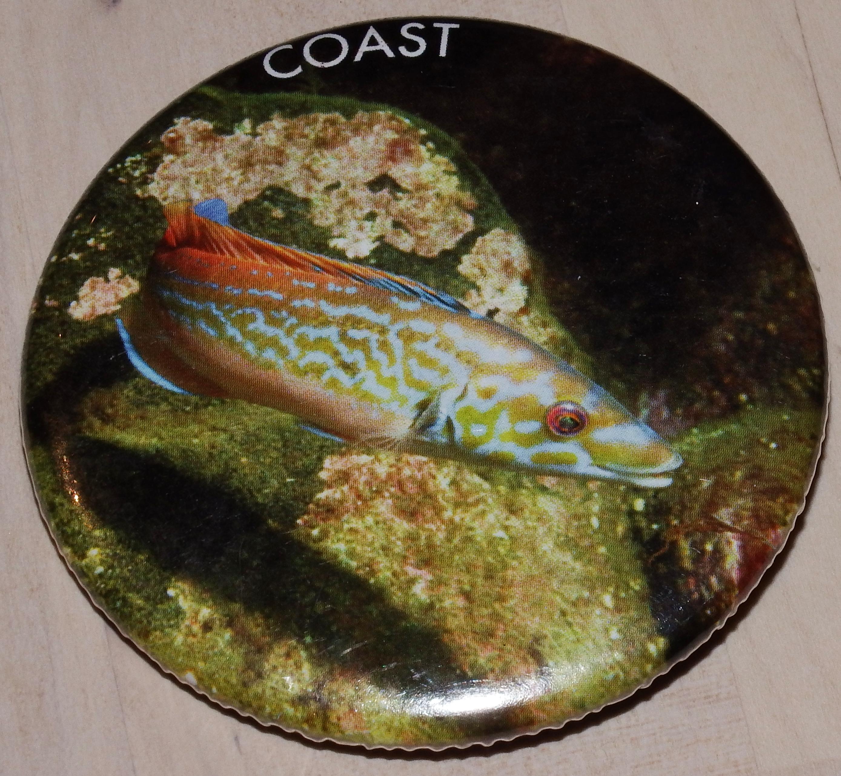 Badge - Cuckoo Wrasse
