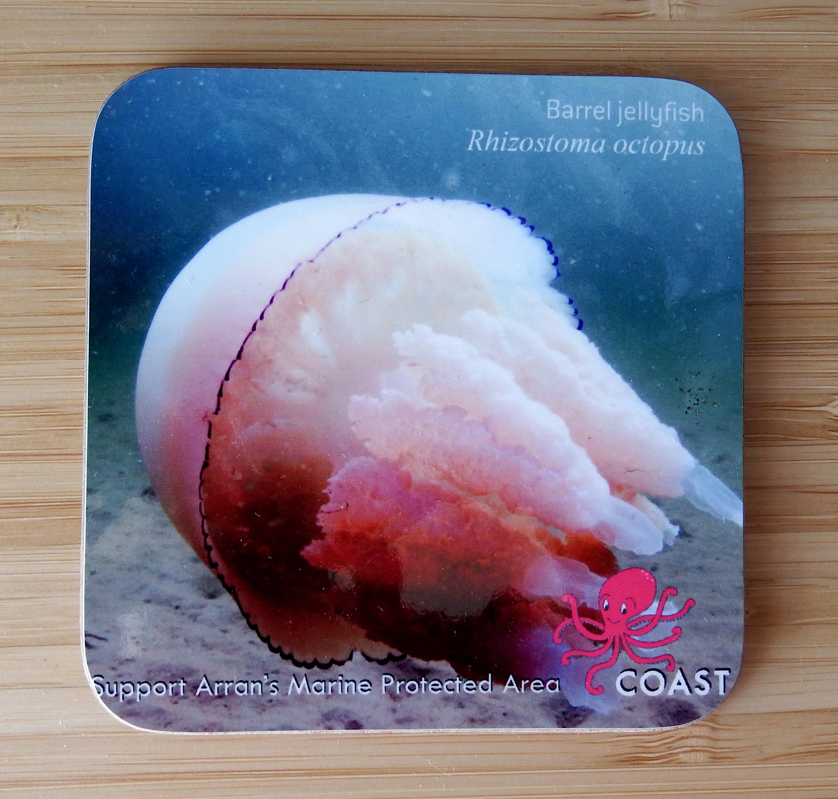 Barrel Jellyfish Coaster