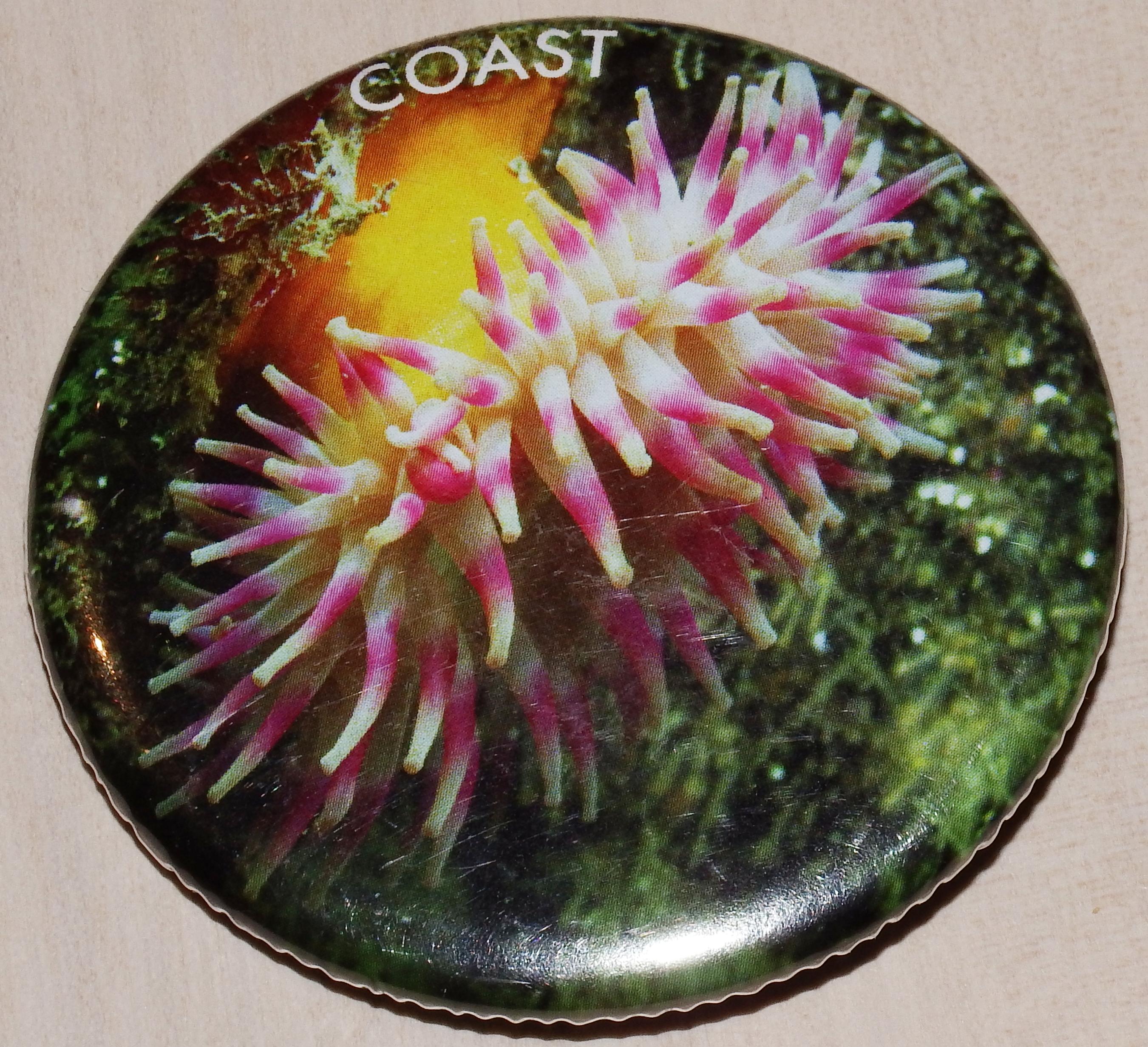 Badge - Anemone