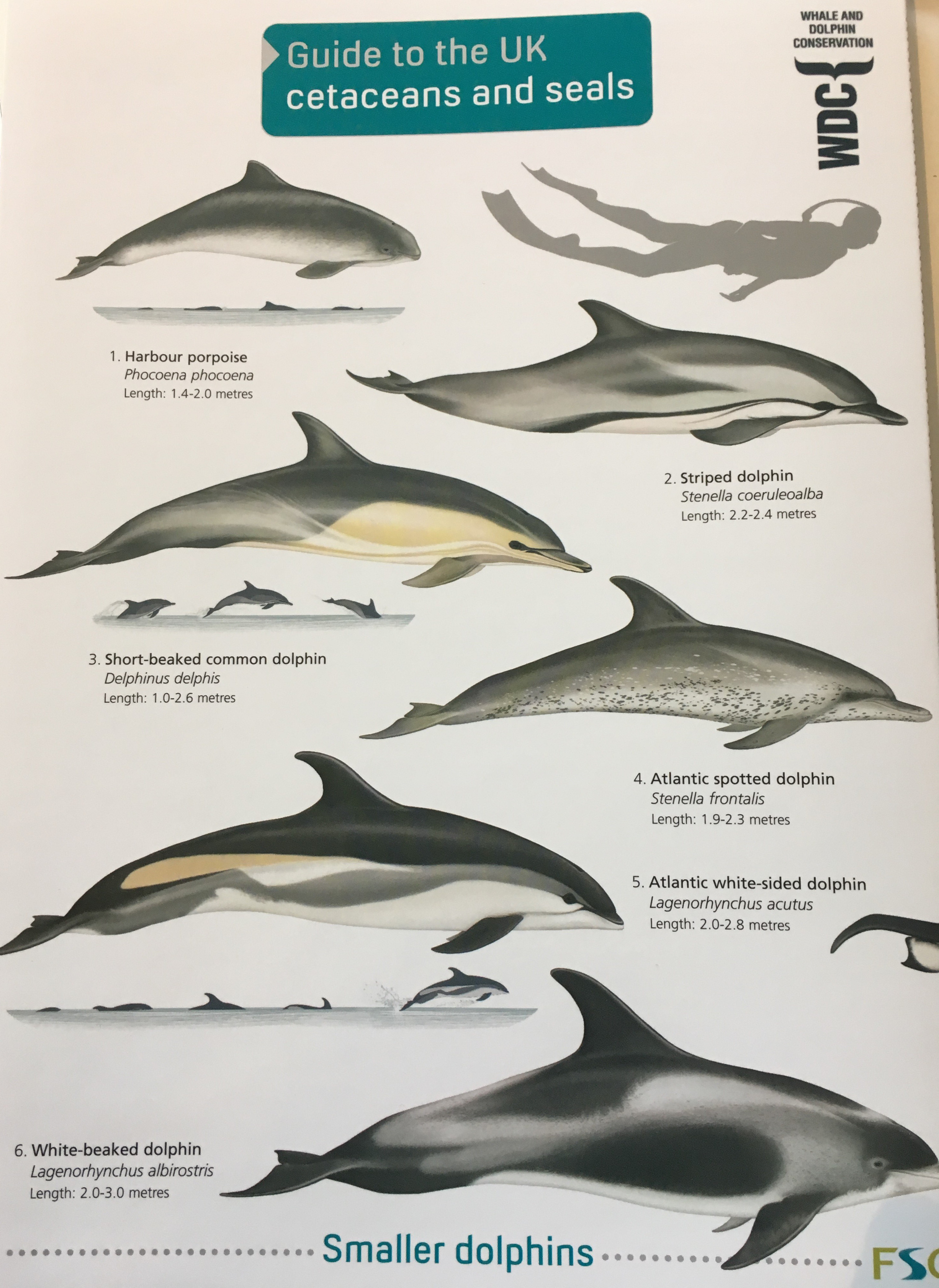 ID Guide - Cetaceans and Seals