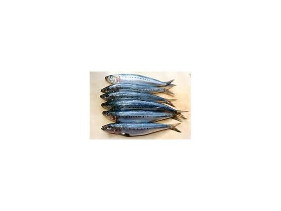 DAF Sardines