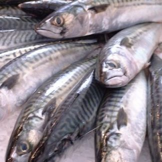 Nutriment Mackerel (Whole)