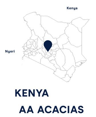 Kenya AA Acacias