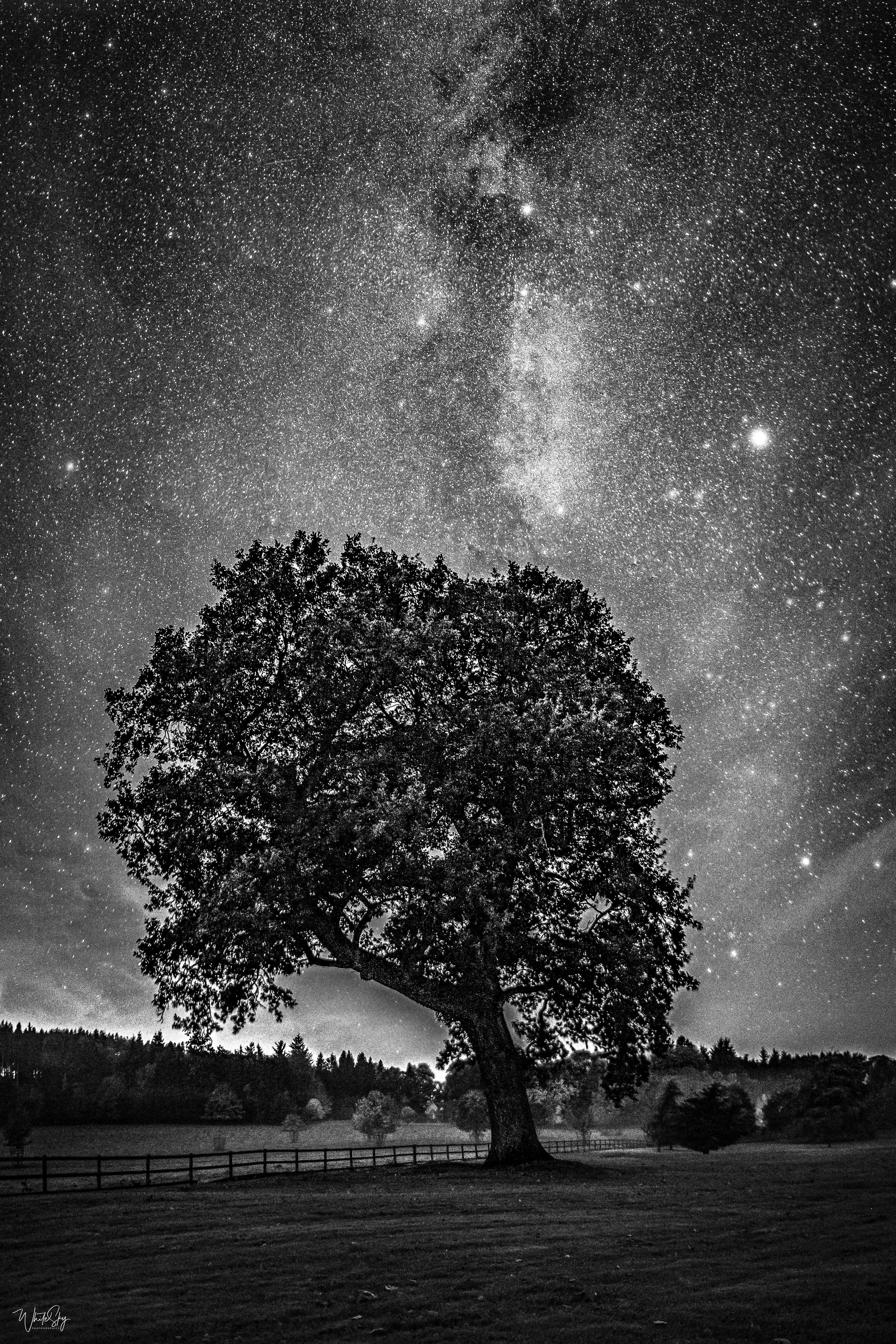 'Old Tree at Castle Fraser', Black&White (MATT FINISH), 60x40, aluminium, 1/5 (IN-STOCK)
