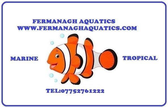 Fermanagh Aquatic,s