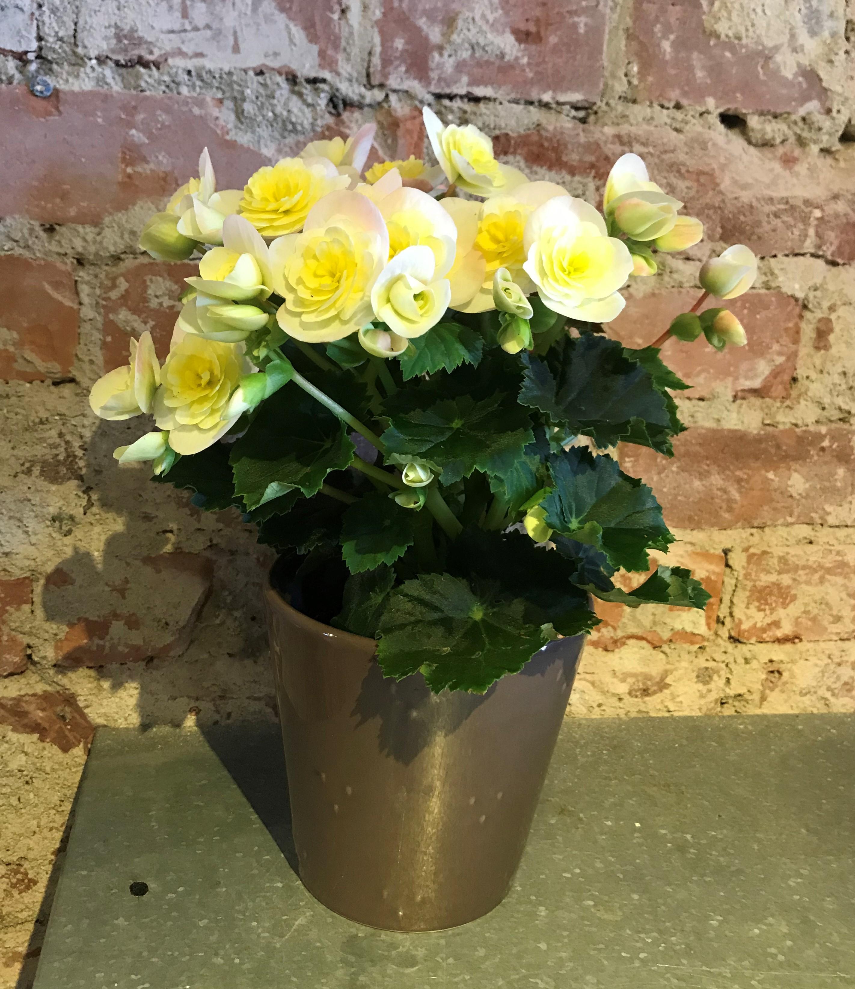 Floristens val - Blomma med kruka