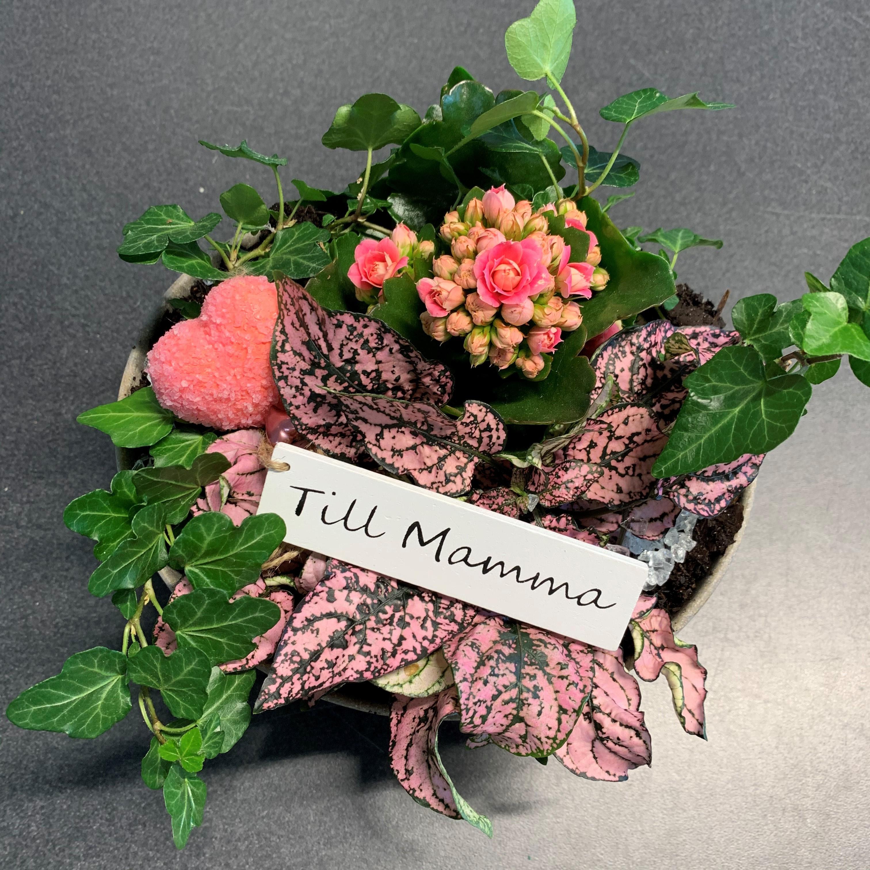 Till världens gladaste mamma - Plantering