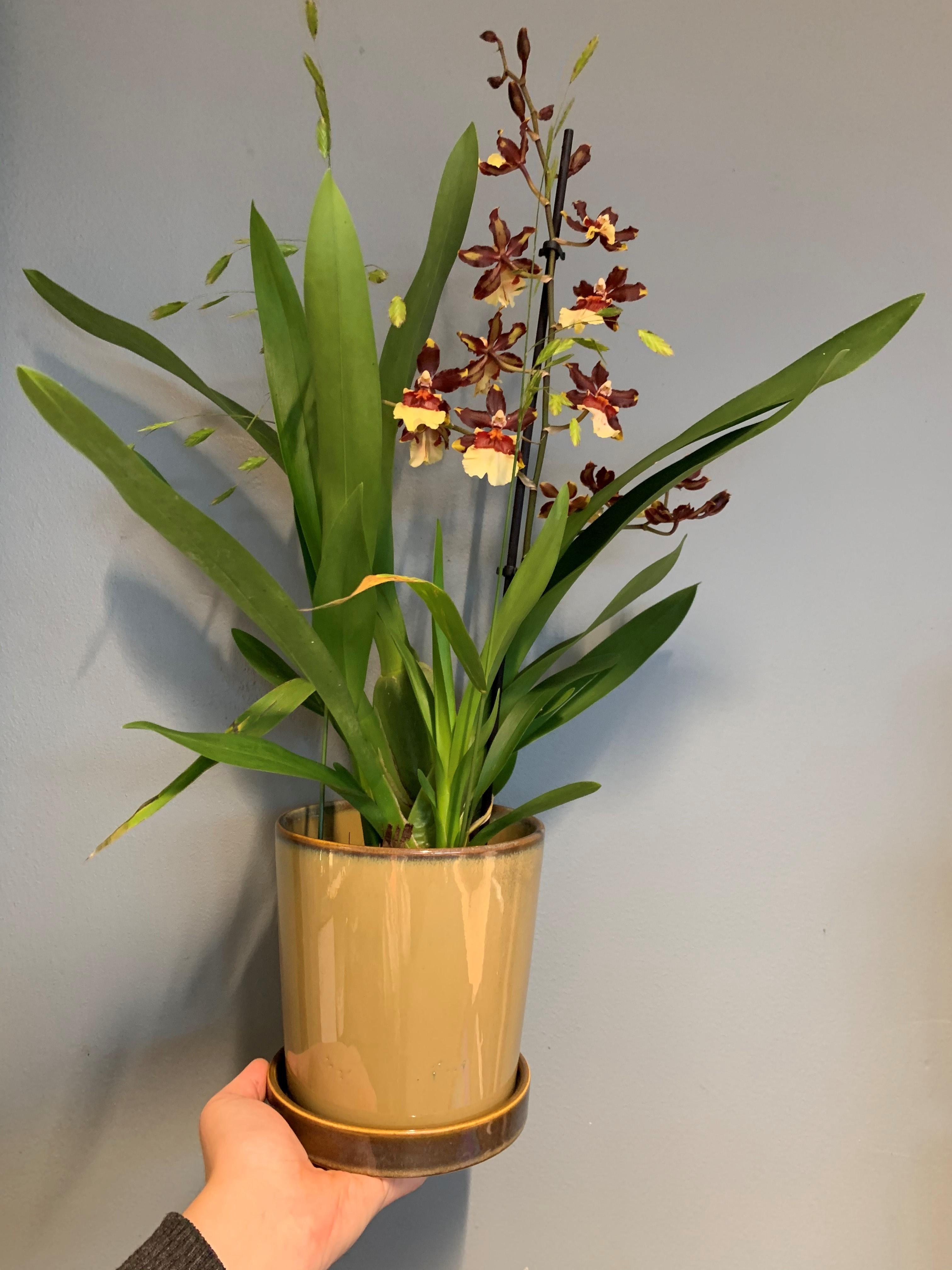 Blommande växt i matchande kruka