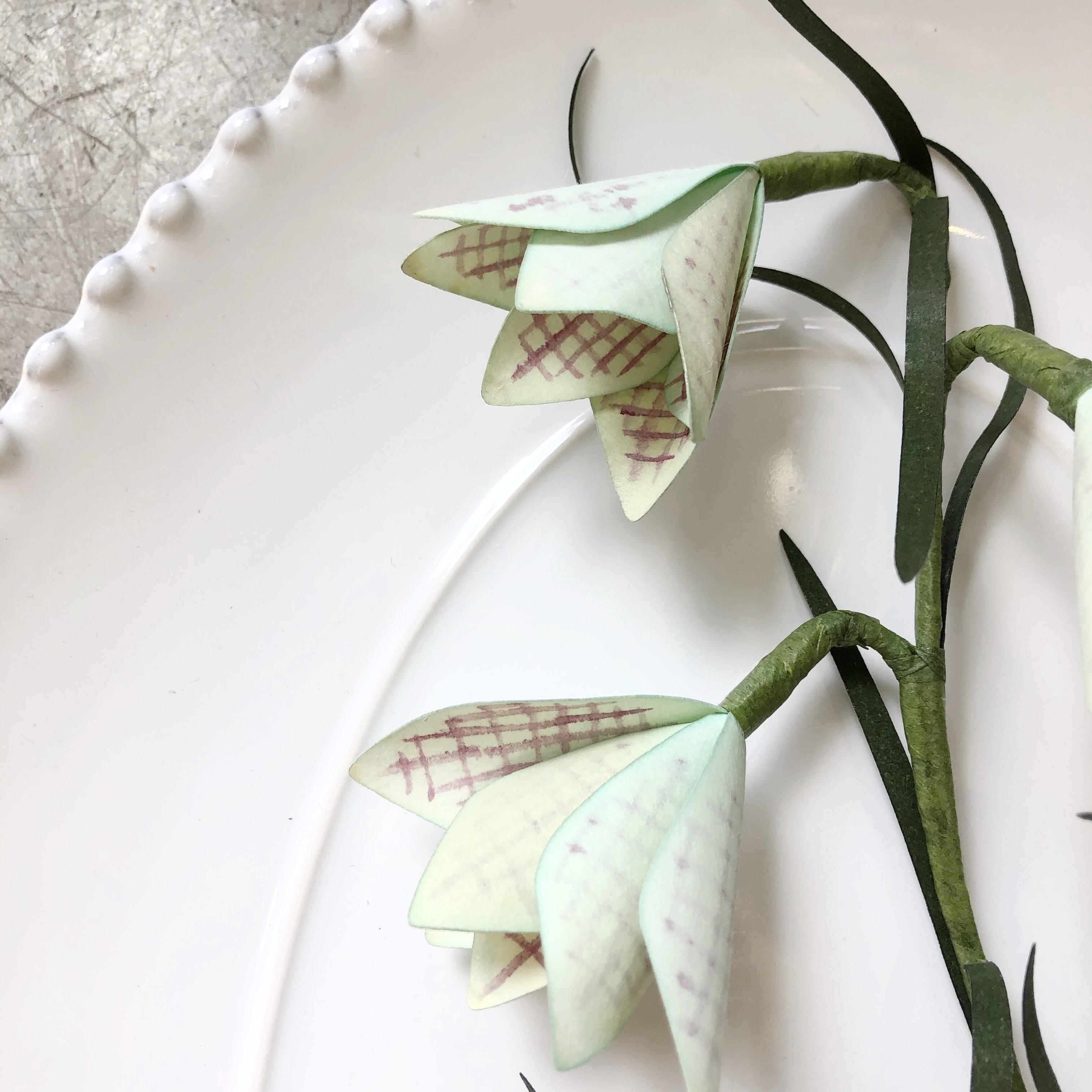 PAPER EDEN / Fritillaria Verticillata Plaid