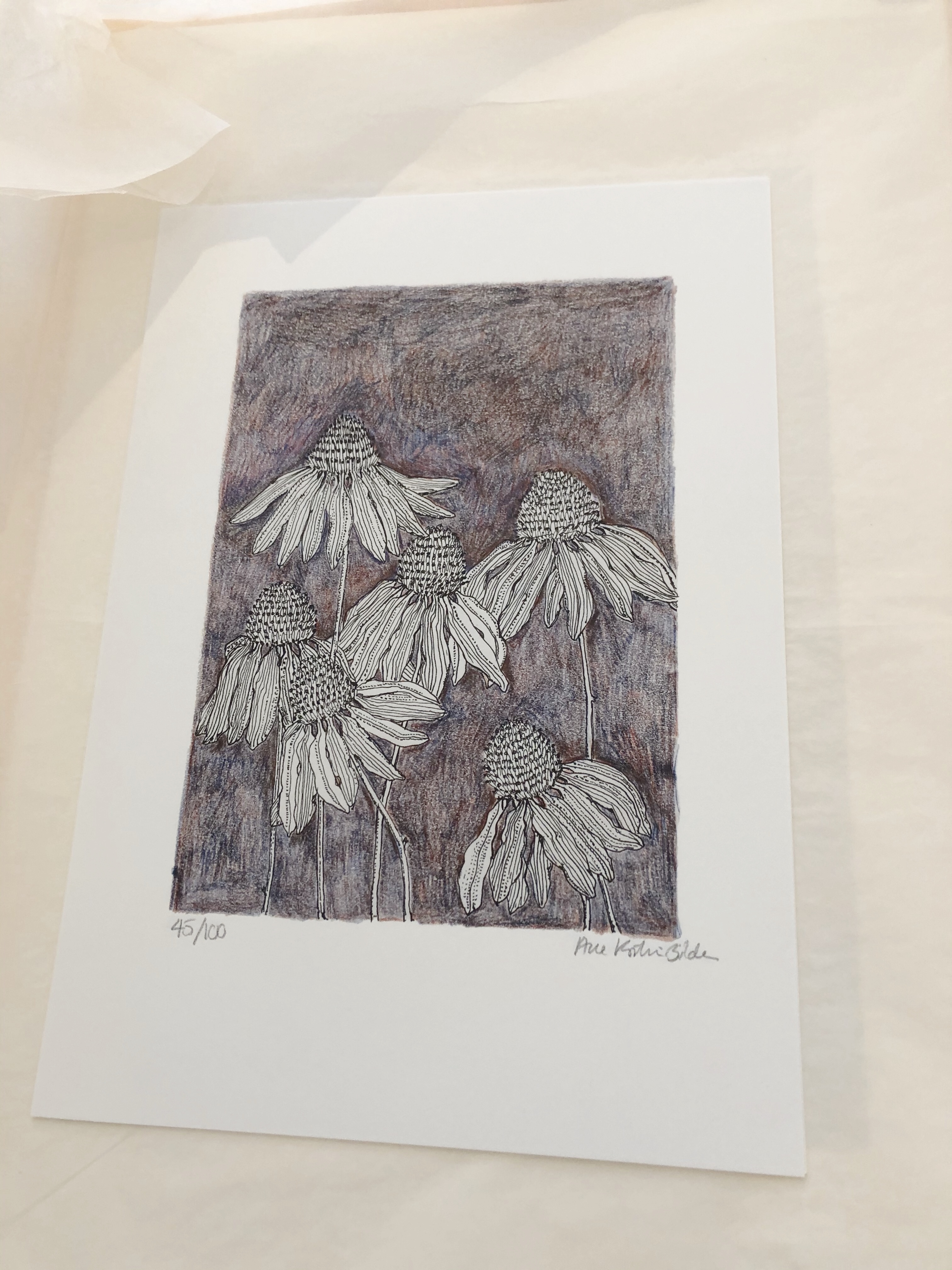 Ane Kirstine Bilde /  Echinacea Artprint